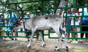 Казахстанцы примут участие в 16-ой Сибирской агротехнической выставке